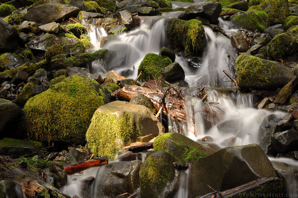 Dappled Light on Stream, Olympic National Park, Washington