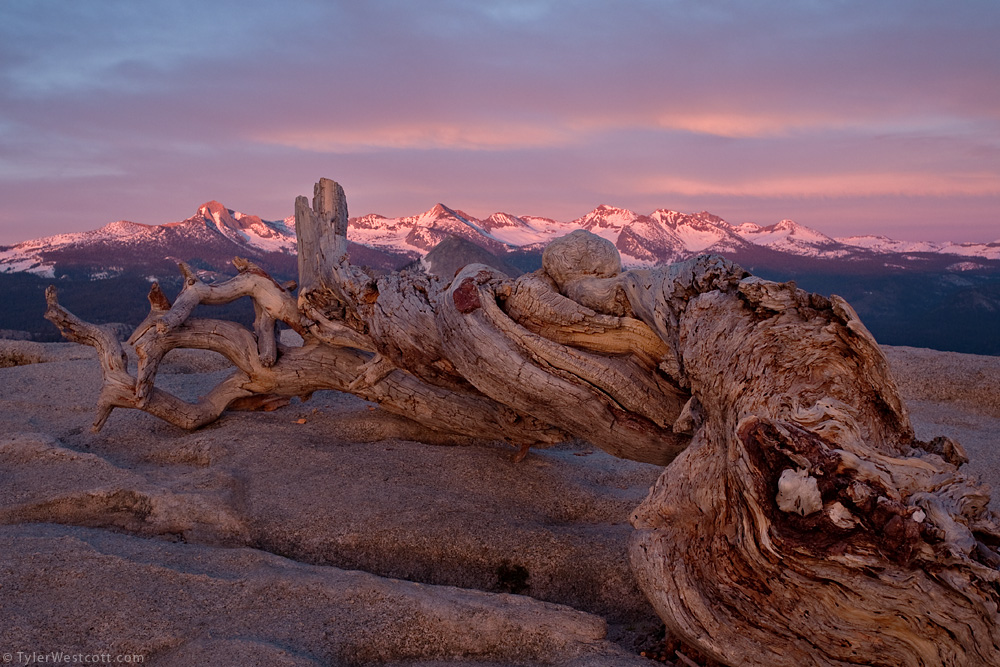 Clark Range and Jeffrey Pine, Yosemite National Park