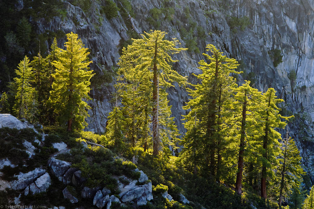 Backlit Trees, Glacier Point, Yosemite National Park