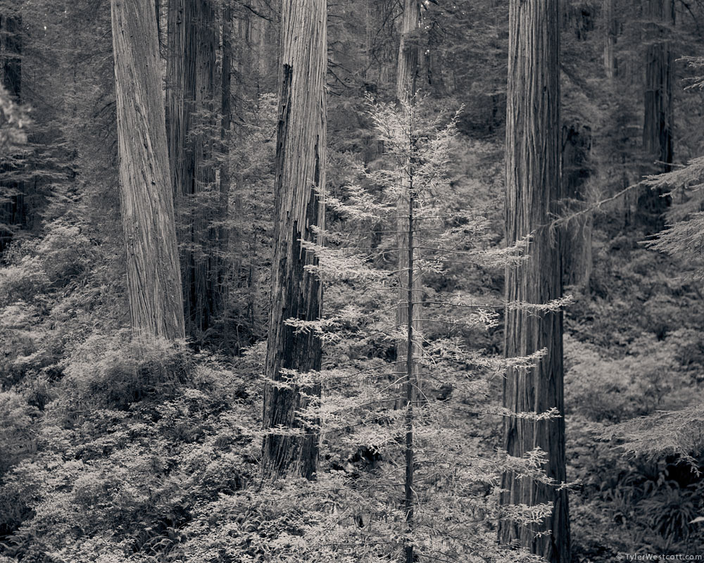 Howland Hill Road, Redwoods National and State Parks