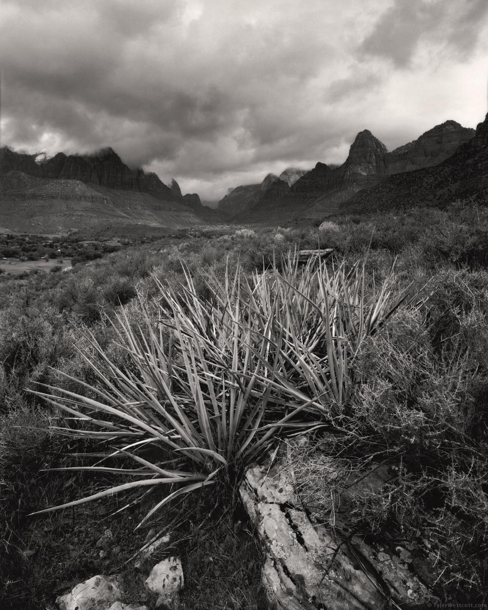 Yucca and Zion Canyon, Zion National Park