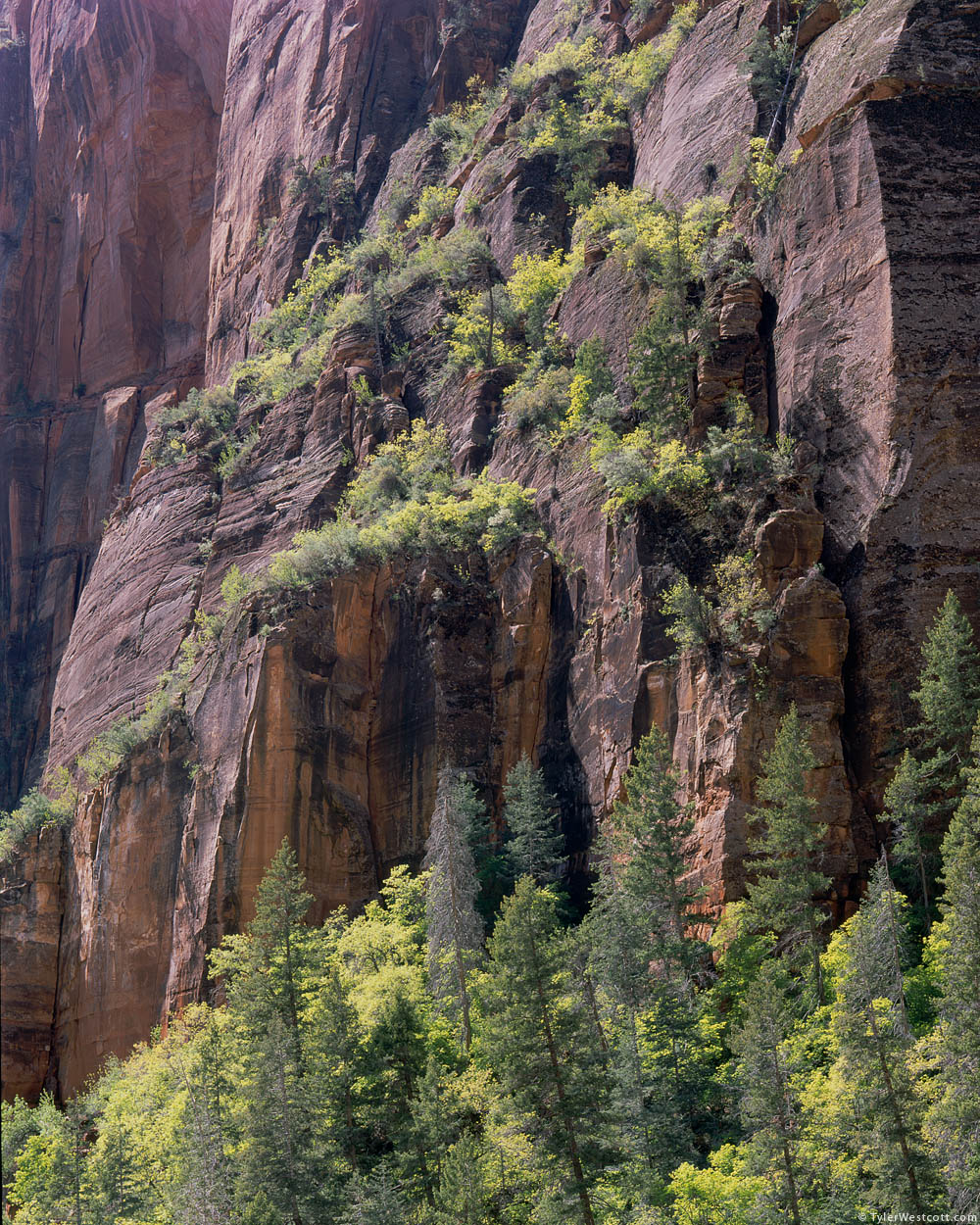 Tree-Covered Cliffs, Lady Mountain, Zion National Park