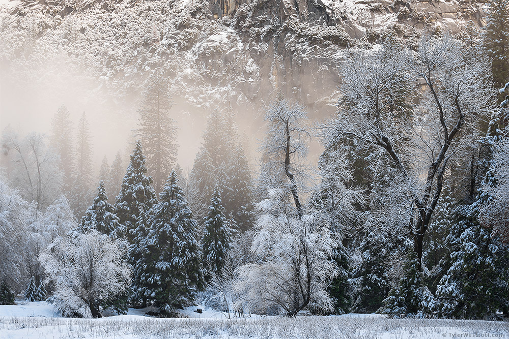 Snow and Fog, Yosemite Valley, Yosemite National Park